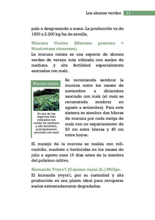 13Los abonos verdes Su siembra es recomendada entre los meses de octubre a diciembre asociado al maíz o mandioca una hiler...