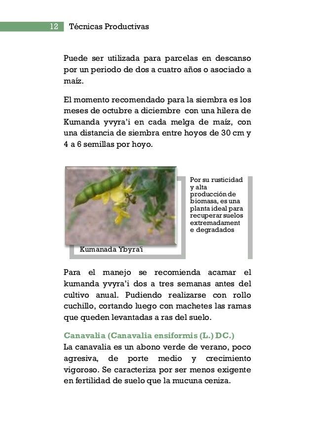14 Técnicas Productivas Crotalaria juncen (Crotalaria juncen L.) Es un abono verde de verano de porte alto (puede alcanzar...