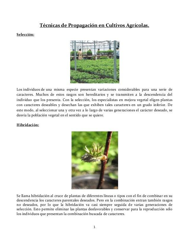 Mejoramiento genetico en plantas de reproduccion asexual de plantas