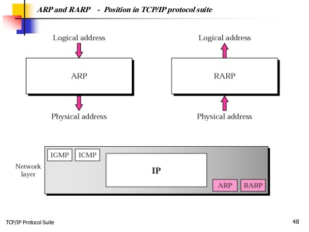 TCP/IP Protocol Suite 48 ARP and RARP - Position in TCP/IP protocol suite