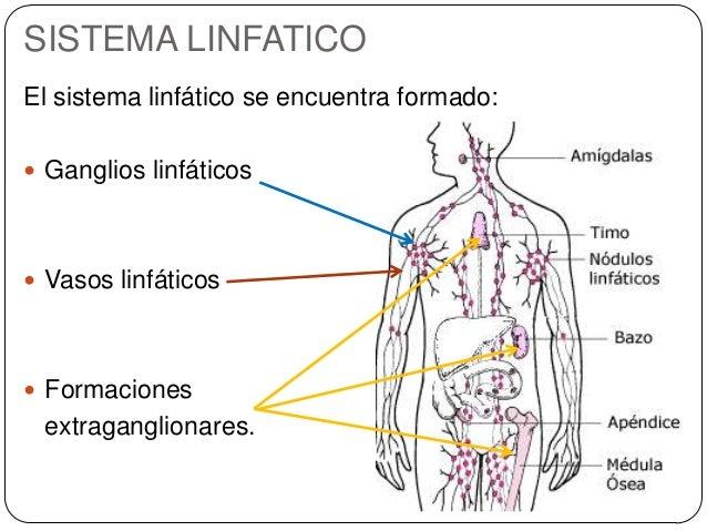 Tcs y sistema linfatico