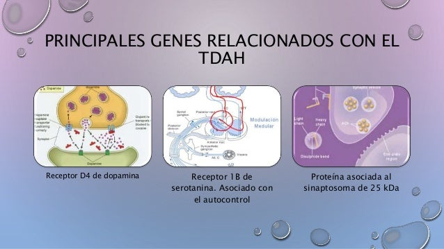 Resultado de imagen de TDAH EN LOS GENES