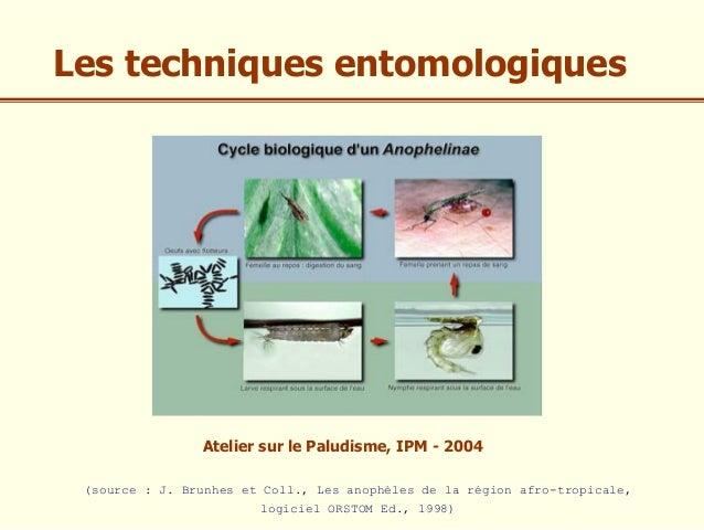 Les techniques entomologiques                Atelier sur le Paludisme, IPM - 2004 (source : J. Brunhes et Coll., Les anoph...