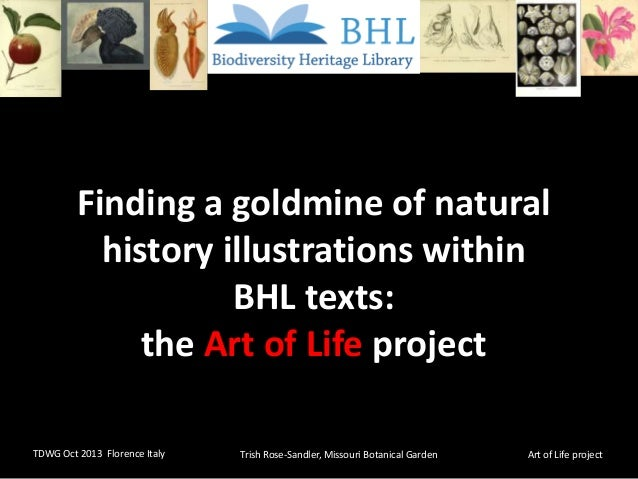 Finding a goldmine of natural history illustrations within BHL texts: the Art of Life project TDWG Oct 2013 Florence Italy...