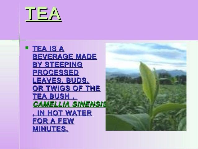 TEATEA TEA IS ATEA IS ABEVERAGE MADEBEVERAGE MADEBY STEEPINGBY STEEPINGPROCESSEDPROCESSEDLEAVES, BUDS,LEAVES, BUDS,OR TWI...