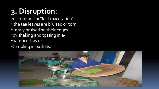 """3. Disruption: •""""disruption""""  or """"leaf maceration"""" • the tea leaves are bruised or torn •lightly bruised on their edges •b..."""