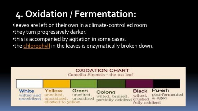 4. Oxidation / Fermentation: •leaves are left on their own in a climate-controlled room •they turn progressively darker. •...