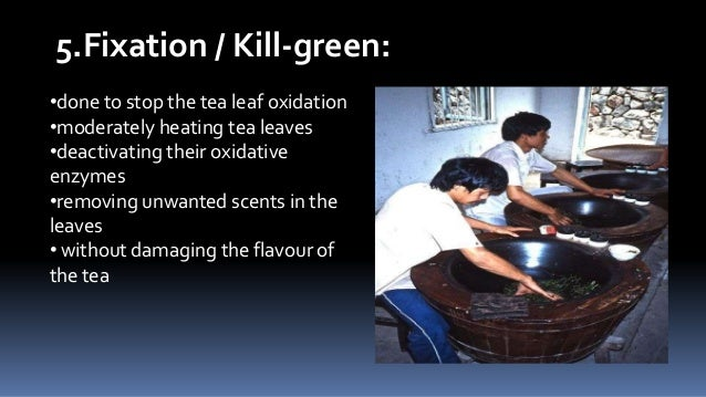 5.Fixation / Kill-green: •done to stop the tea leaf oxidation •moderately heating tea leaves •deactivating their oxidative...