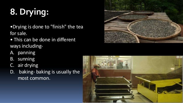 """8. Drying: •Drying is done to """"finish"""" the tea for sale. • This can be done in different ways includingA. panning B. sunni..."""