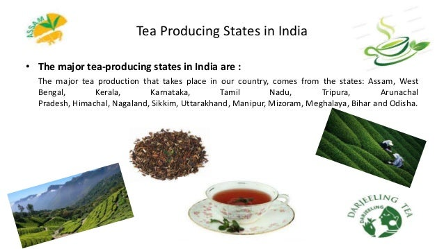 Tea Producing States in India • The major tea-producing states in India are : The major tea production that takes place in...