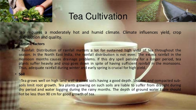 Tea Cultivation • Tea requires a moderately hot and humid climate. Climate influences yield, crop distribution and quality...