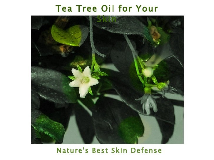 Tea Tree Oil for Your Skin Nature's Best Skin Defense