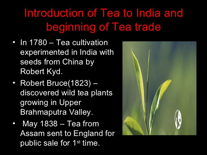 the tea industry in india since While chai might be one of the more trendy tea orders at american coffee shops, in india it  india, with consumption growing 50% since  tea industry news.