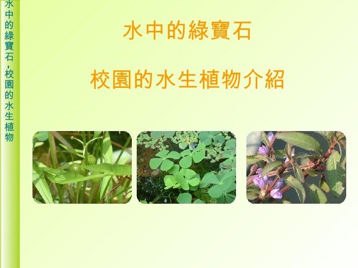 水中的綠寶石 校園的水生植物介紹