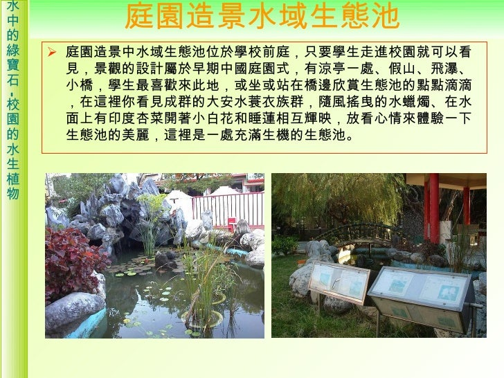 校園的水生植物介紹 Slide 3