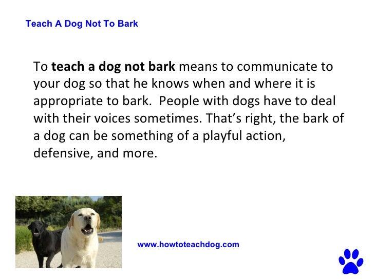 How Do You Teach A Dog Not To Bark