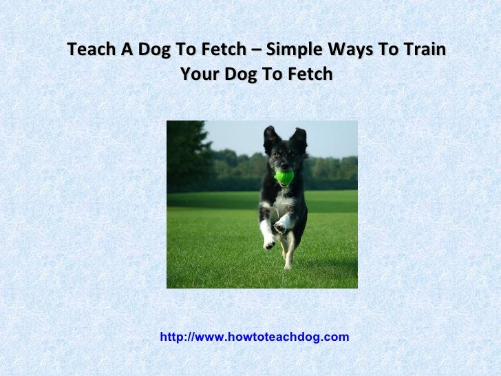 how to teach a dog to play fetch