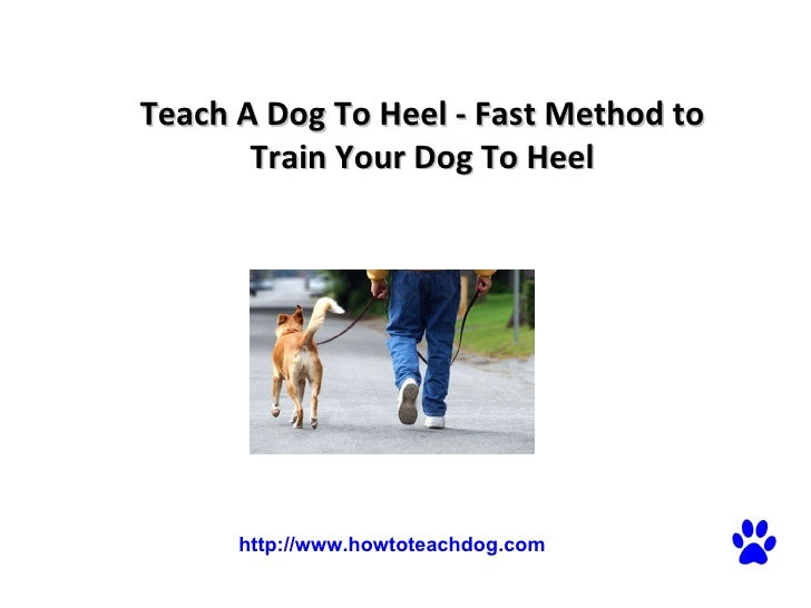 Teach A Dog To Heel - Fast Method to Train Your Dog To Heel  http://www.howtoteachdog.com