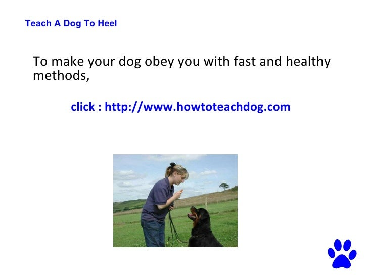 Best Way To Train A Dog To Heel