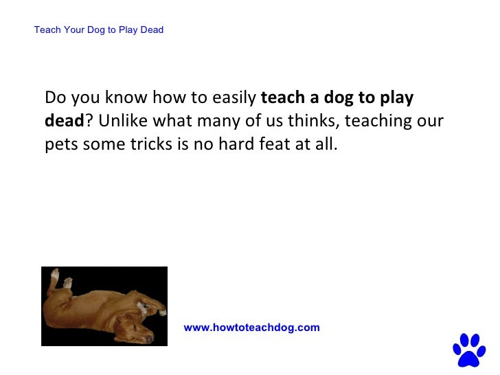 tricks to teach your dog to play dead