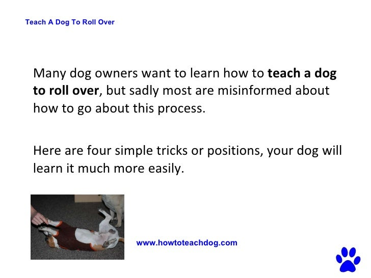 20 Unusual Tricks You Should Start Teaching Your Dog Today ...