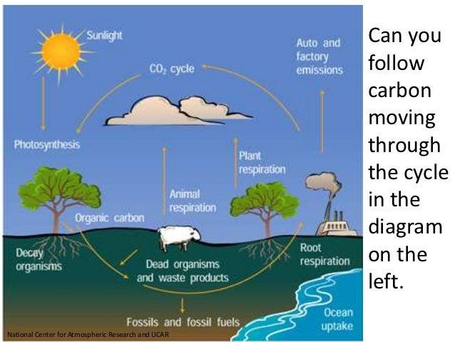 Carbon Cycle Worksheet 002 - Carbon Cycle Worksheet