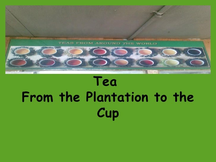Tea  From the Plantation to the Cup