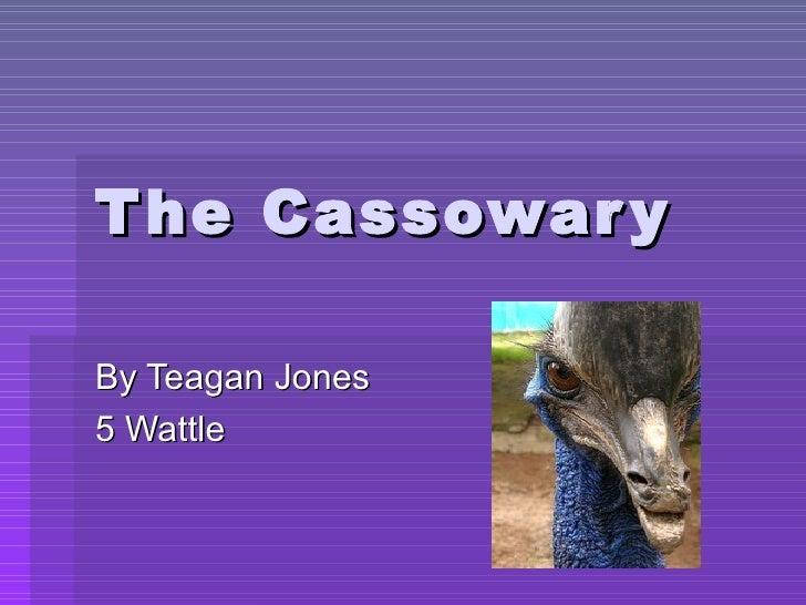 The Cassowary By Teagan Jones 5 Wattle