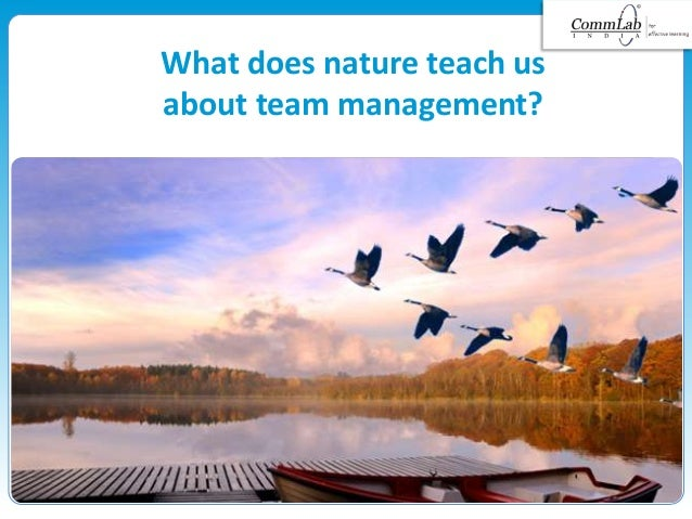 What does nature teach us about team management?