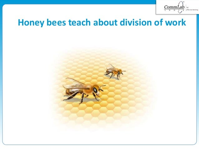 Honey bees teach about division of work