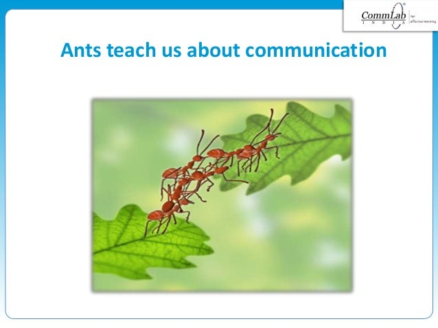 Ants teach us about communication
