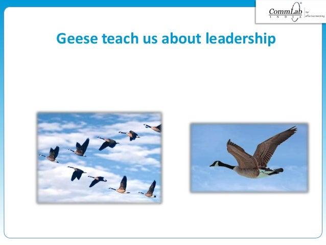 Geese teach us about leadership