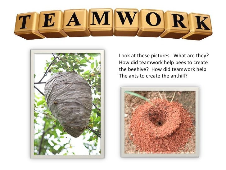 Look at these pictures. What are they?How did teamwork help bees to createthe beehive? How did teamwork helpThe ants to cr...