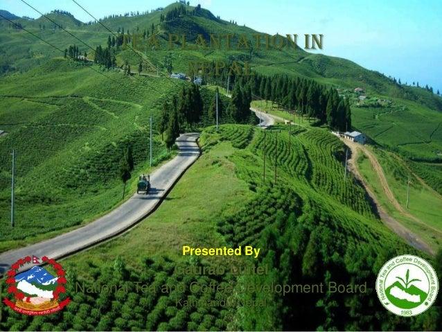 Tea Plantation in Nepal  Presented By  Gaurab Luitel National Tea and Coffee Development Board Kathmandu, Nepal