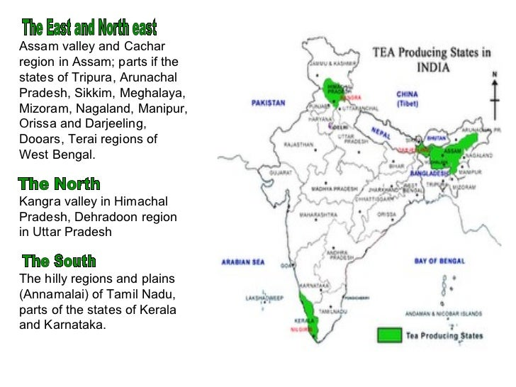research papers on tea in india Present, india is the second largest producer of tea in the world and produces around 1112 million kilograms of tea accounting for 2456% of tea produced worldwide the tea industry accounts for the employment of more than 2 million people in india.