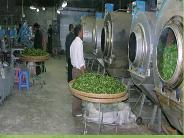 Rolling / Shaping  The damp tea leaves are then rolled to be formed into wrinkled strips, by hand  or using a rolling ma...