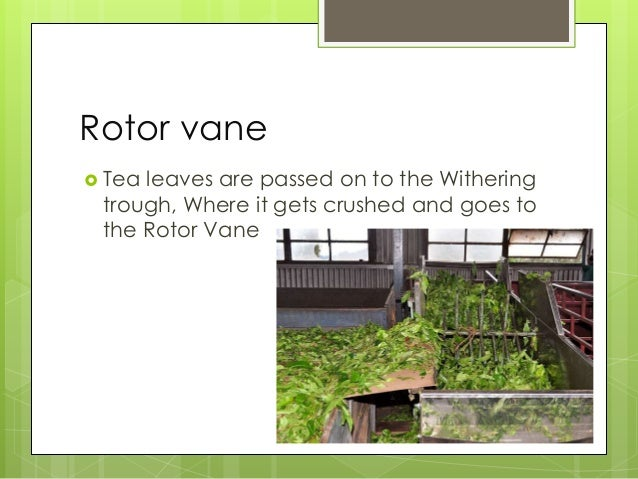 Oxidation/Fermentation  For teas that require oxidation, the leaves are left on their own in a climate-controlled room wh...
