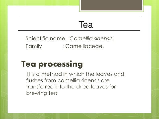 Tea Scientific name :Camellia sinensis. Family : Camelliaceae. Tea processing It is a method in which the leaves and flush...