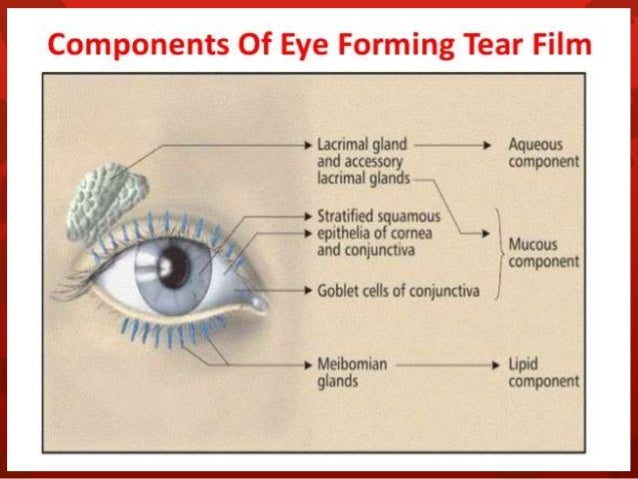 five accessory eye structures that contribute to tears Overall, systemic drugs may cause dry eye secondary to decreased tear  production  however, not every drug does actually reach the ocular surface  structures  the use of five or more prescription drugs (polypharmacy) and the  addition of  damage to goblet cells and accessory lacrimal glands may affect  tear quality or.
