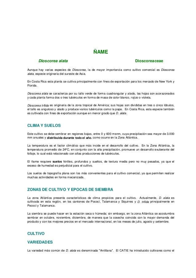 ÑAME Dioscorea alata Dioscoreaceae Aunque hay varias especies de Dioscorea, la de mayor importancia como cultivo comercial...