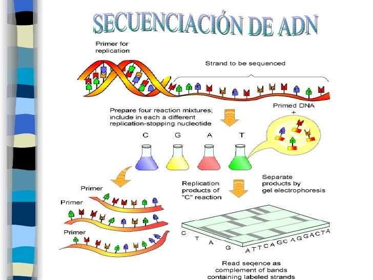Tec de secuenciacion for En 2003 se completo la secuenciacion del humano