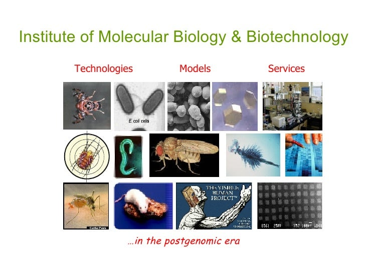 Institute of Molecular Biology & Biotechnology Technologies Models Services … in the postgenomic era