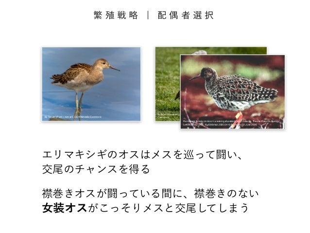 繁殖戦略 | 配偶者選択  By Tokumi [Public domain], via Wikimedia Commons  By Arjan Haverkamp [CC-BY-2.0 (http://creativecommons.org/...