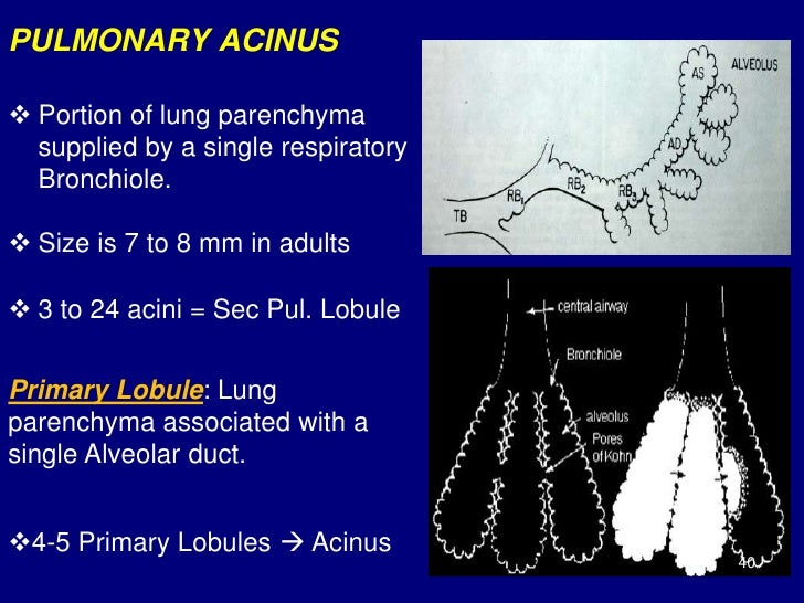 Technical Aspect Of Hrct Normal Lung Anatomy Hrct Findings Of Lung