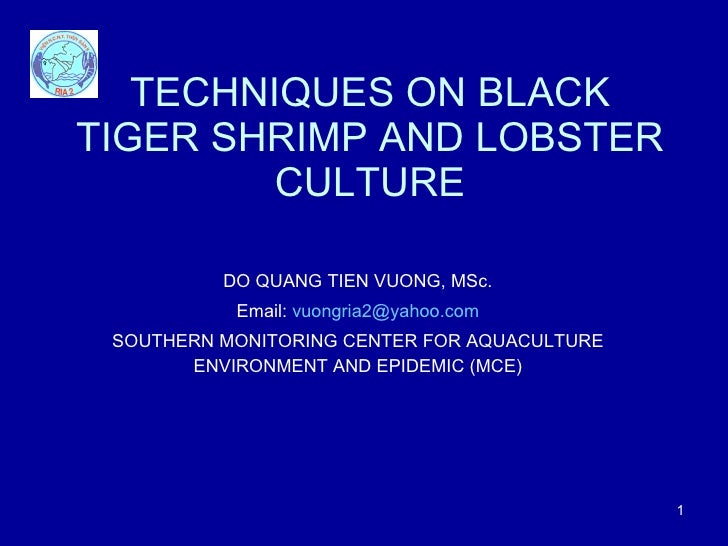 TECHNIQUES ON BLACK TIGER SHRIMP   AND LOBSTER CULTURE DO QUANG TIEN VUONG, MSc. Email:  [email_address] SOUTHERN MONITORI...