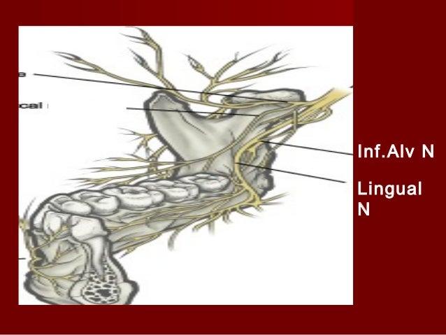 Mandibular Nerve Block 1) Gow Gates technique