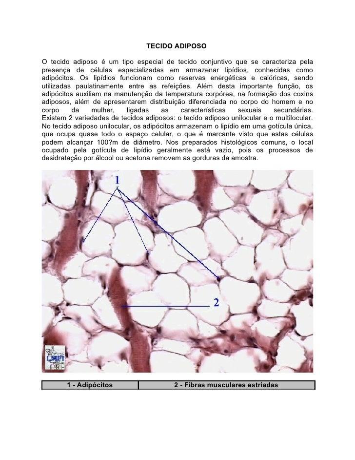 TECIDO ADIPOSOO tecido adiposo é um tipo especial de tecido conjuntivo que se caracteriza pelapresença de células especial...