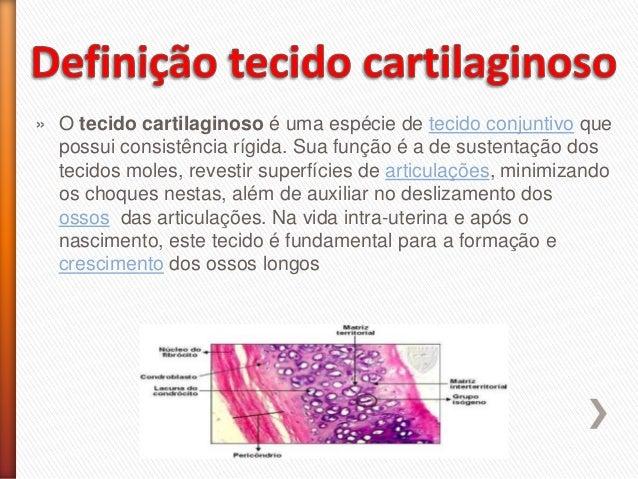 » O tecido cartilaginoso é uma espécie de tecido conjuntivo que possui consistência rígida. Sua função é a de sustentação ...