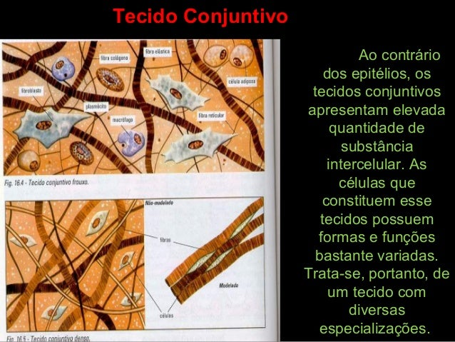 Ao contrário dos epitélios, os tecidos conjuntivos apresentam elevada quantidade de substância intercelular. As células qu...