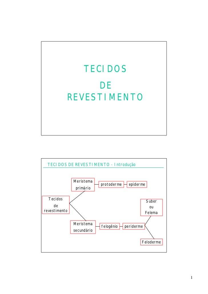 TECIDOS                 DE            REVESTIMENTO TECIDOS DE REVESTIMENTO - Introdução               Meristema           ...